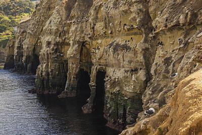 Photograph - La Jolla Cliffs by Lee Kirchhevel