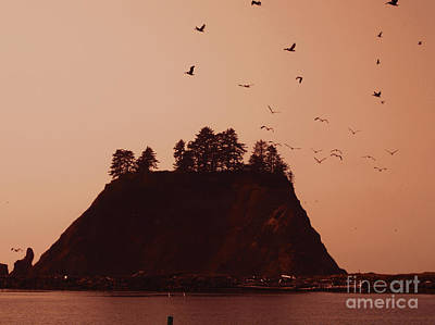 La Push Silhouette With Birds Art Print by Kym Backland