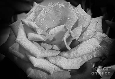 La Rosa Art Print by Eyzen M Kim