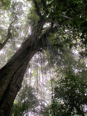 Photograph - La Tigra Rainforest Canopy by David Beebe
