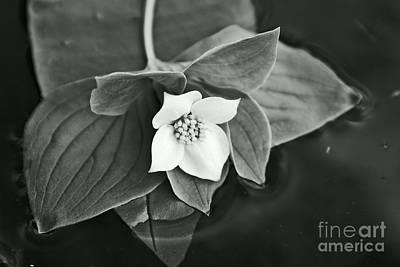 Photograph - La Vie En Noir Et Blanc by Aimelle