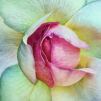 Petals Photograph - La Vie En Rose by Piet Flour