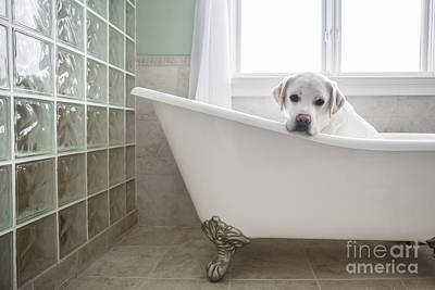 Block Photograph - Lab In A Bathtub by Diane Diederich