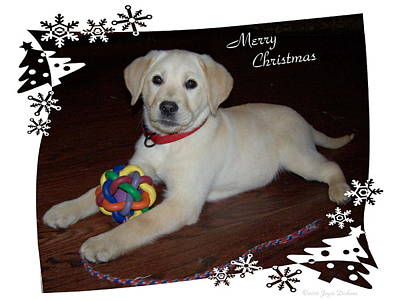 Photograph - Lab Pup Merry Christmas by Joyce Dickens