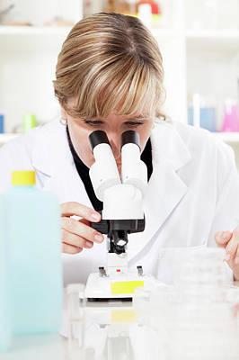 Scrutiny Photograph - Lab Technician Using A Microscope by Wladimir Bulgar