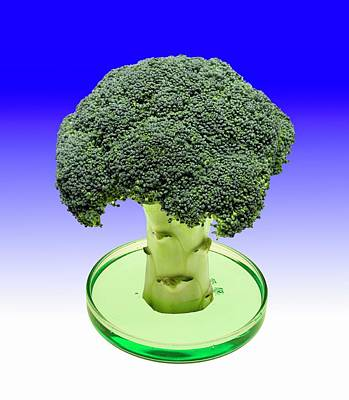 Broccoli Wall Art - Photograph - Laboratory-grown Broccoli by Victor De Schwanberg/science Photo Library