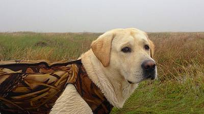 Photograph - Labrador Hunting Partner by Kristina Deane