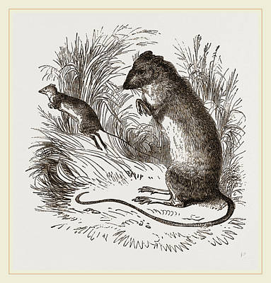 Jumping Mouse Drawing - Labrador Jumping Mouse by Litz Collection