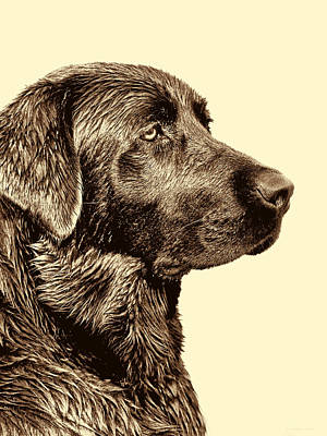 Photograph - Labrador Retriever Dog In Sepia by Jennie Marie Schell