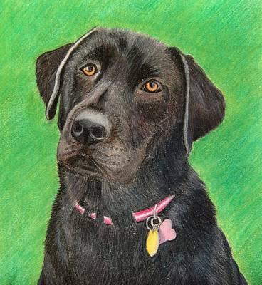 Drawing - Labrador Retriever by Melanie Feltham