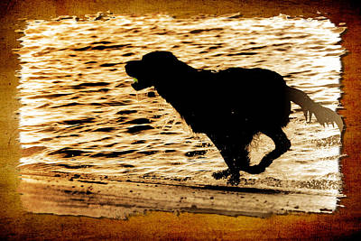 Print featuring the photograph Labrador Silhouette by Eleanor Abramson