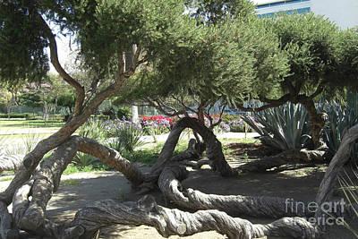 Trunks Photograph - Labrea Tar Pit Trees by Deborah Smolinske
