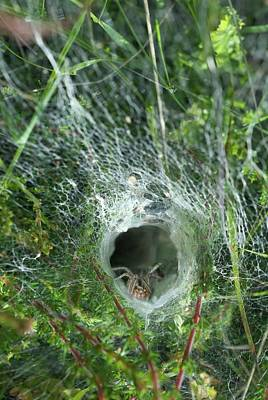 Spider Photograph - Labyrinth Spider In Web by David Aubrey