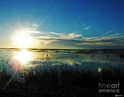 Photograph - Lacassine Afternoon Sparkle by Lizi Beard-Ward