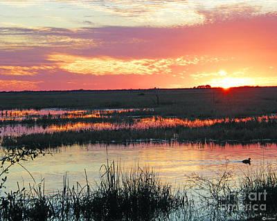 Photograph - Lacassine January Sunset by Lizi Beard-Ward