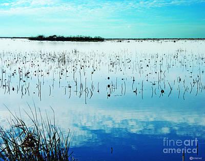 Photograph - Lacassine Nwr Blue Pool by Lizi Beard-Ward