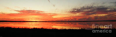 Photograph - Lacassine Nwr Panarama by Lizi Beard-Ward
