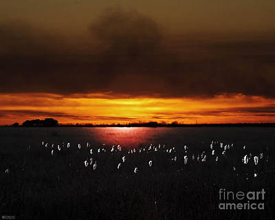 Digital Art - Lacassine Nwr Plant Rd Sunset by Lizi Beard-Ward