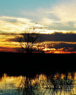 Photograph - Lacassine Painted Sunset by Lizi Beard-Ward