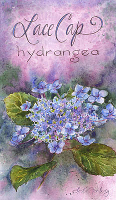 Hydrangea Watercolor Painting - Lace Cap Hydrangea by Leslie Fehling
