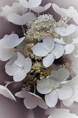 Photograph - Lacecap Hydrangea by Amy Porter