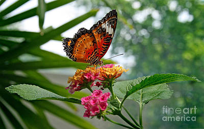 Lacewing Butterfly Art Print by Karen Adams
