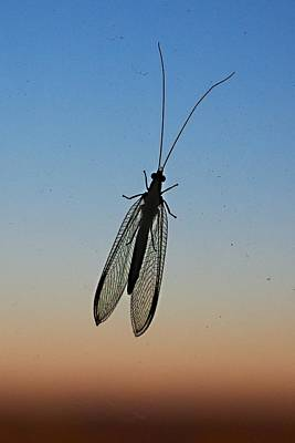 Lacewing Art Print by Carl Engman