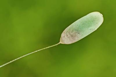 Leaf Surface Photograph - Lacewing Egg by Gerd Guenther