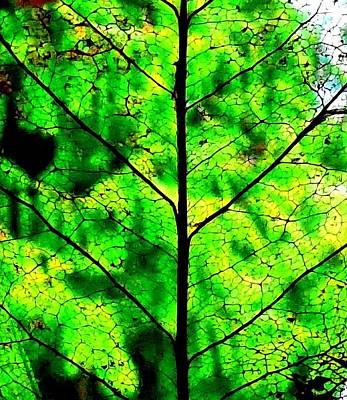 Lacey Leaf Art Print