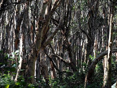 Photograph - Lachlan Swamp by Mark Sullivan
