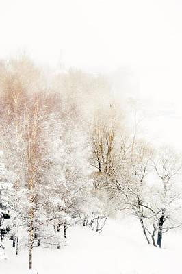 Photograph - Lacy Winter 1 by Jenny Rainbow