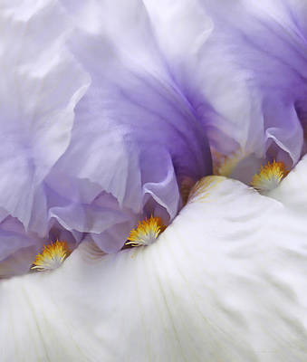Photograph - Ladies In Waiting Lavender Iris Flowers by Jennie Marie Schell