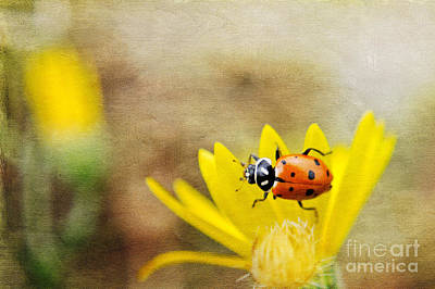 Photograph - Lady Beetle On Yellow Flower by Marianne Jensen