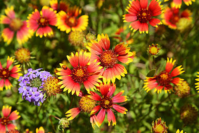 Wildflowers Photograph - Lady Bird And Her Flowers by Lynn Bauer