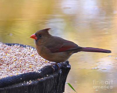 Photograph - Lady Bird by Carol  Bradley