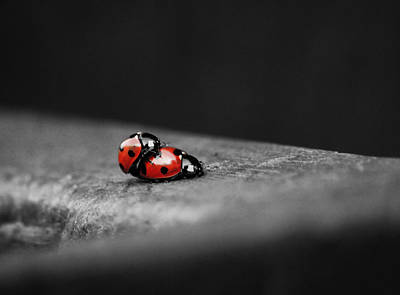 Lady Bug Photograph - Lady Bird Loving by Martin Newman