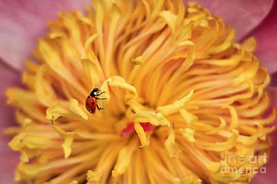 Lady Bug Print by Darren Fisher