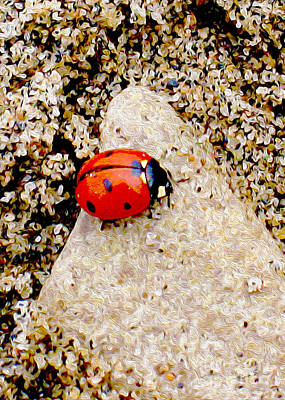 Photograph - Lady Bug In The Sand by Nina Silver