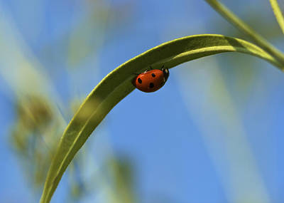 Lady Bug Lady Bug Print by Jane Eleanor Nicholas