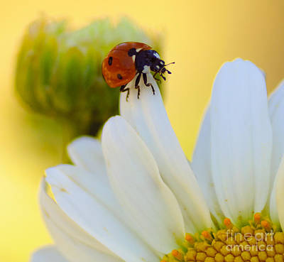 Photograph - lady Bug by Scott Gould