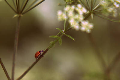 Photograph - Lady Bug by Stephanie Hollingsworth