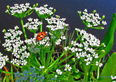 Photograph - Lady Bug by T Guy Spencer