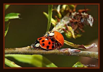 Photograph - Lady Bugs by Michaela Preston