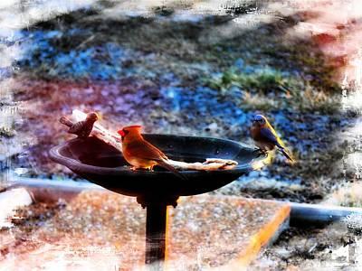 Manipulation Photograph - Lady Cardinal And Mr Bluebird by EricaMaxine  Price