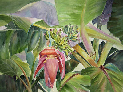 Lady Fingers - Banana Tree Art Print