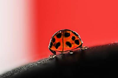 Ladybug Wall Art - Photograph - Lady Got Back by Susan Capuano