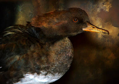 Artistic Hooded Portrait Photograph - Lady Merganser by Deena Stoddard