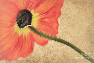 Intense Mixed Media - Lady Poppy by Angela Doelling AD DESIGN Photo and PhotoArt