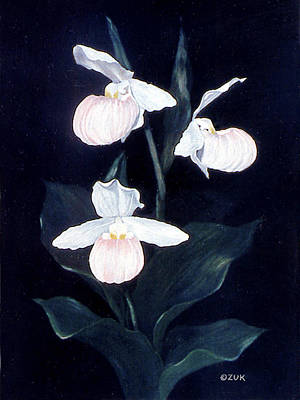 Painting - Lady Slipper by Karen Zuk Rosenblatt