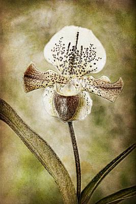 Robert Jensen Photograph - Lady Slipper Orchid by Robert Jensen